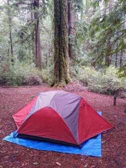 Tent Big Basin.jpg
